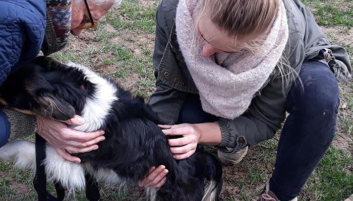 ostéopathie animale à Lisieux