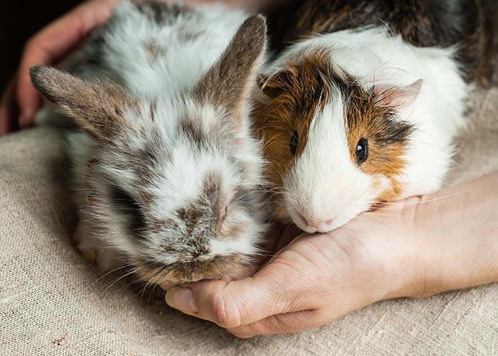 Ostéopathe pour animaux de compagnie à Lisieux